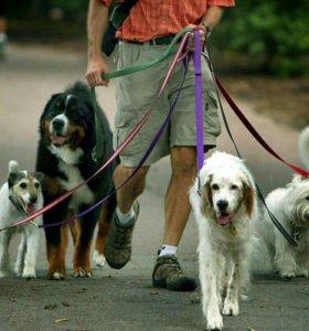 Выгуливаю собак, хорьков, выдр и др.