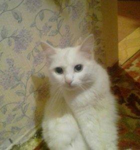 Ищем котика для кошечки, за котят отвечаем