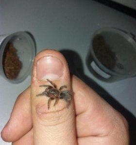 Пауки и паучки