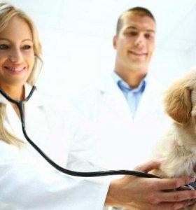 Требуется ветеринарный врач