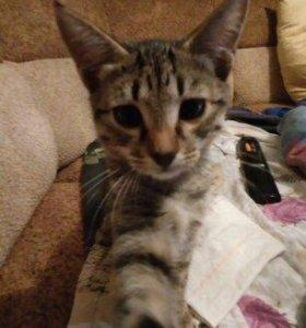 Отдам котят в заботливые руки.