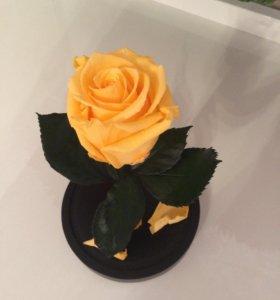 Живые розы в колбах