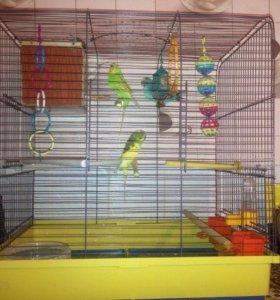 Продам клетку с тремя волнистыми попугайчиками