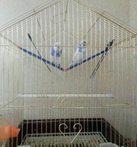 Попугаи волнистые с клеткой