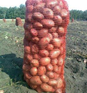 картофель с доставкой на дом.