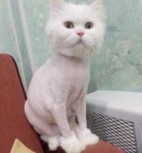 Стрижка животных (кошек и собак)🐈🐩
