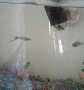 Аквариум, рыбы и фильтр