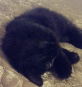 Котенок от кошки-мышеловки