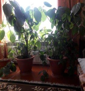 Комнатое растение