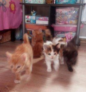 Котятки-ребятки