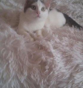 Кошка (В добрые руки)