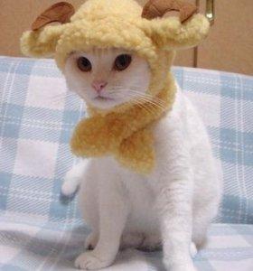 Груминг(стрижка) собак и кошек