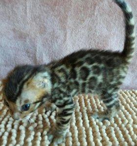 Котик 5тр