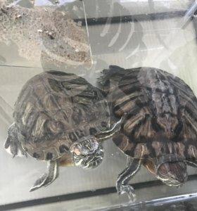 Черепахи, аквариум, компрессор