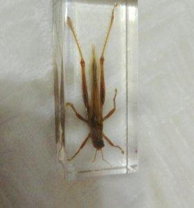 Цитрусовая саранча
