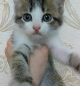 Котята!!!