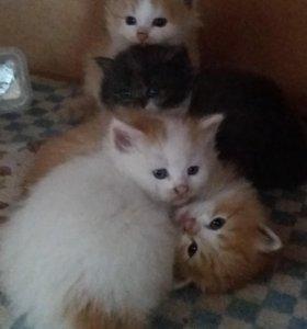 4 котенка отдам в хорошие руки. г Новокубанск