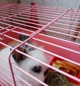 Декаративный кролик 🐰