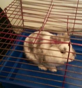 Продпм декоротивного кролика здоровый и активный з