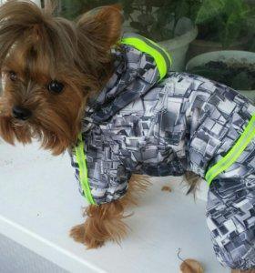 Пошив одежки для ваших любимых собачек