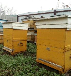 Ульи для пчел б/у