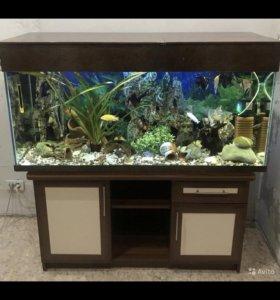 Продам аквариум ! 325 литров , вместе с тумбой .