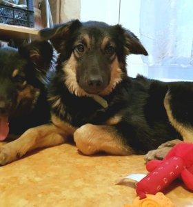 Замечательные щенки метисы ищут дом