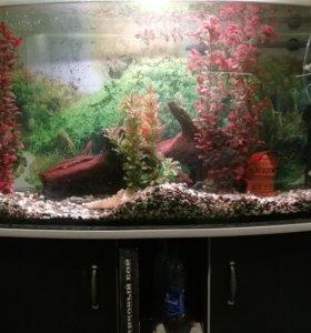 Аквариум с рыбами.