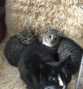 Котейка в дар