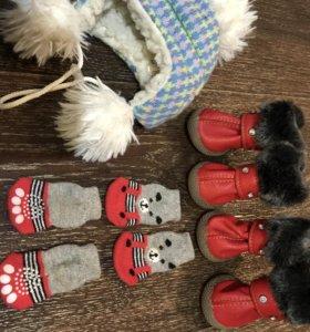Шапка,ботинки на маленькую собаку