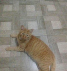 Кот-мышилов