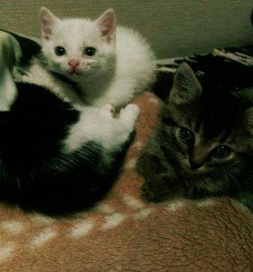 Котята в добрые руки😸