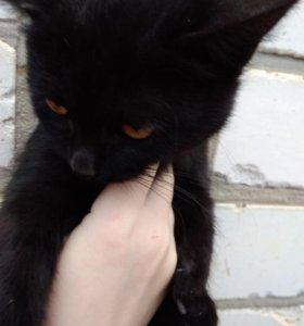 Отдаем котов, котят и кошек в хорошие руки