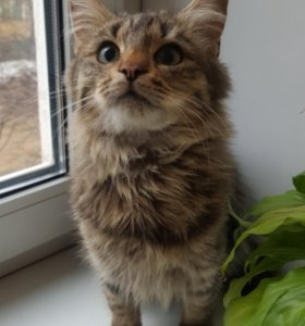 Кошечку-подростка в добрые руки