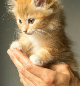 Возьму котёнка!
