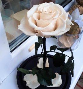 Роза в колбе. Подарок для близких людей!