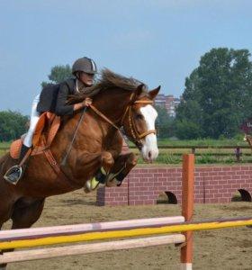 Продажа / аренда лошадей