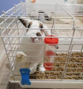 Кролик +клетка