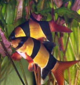 экзотические рыбки