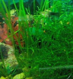 Растения в аквариум.