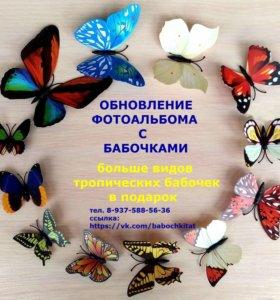 Живые тропические бабочки в подарок
