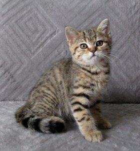 Супер кот