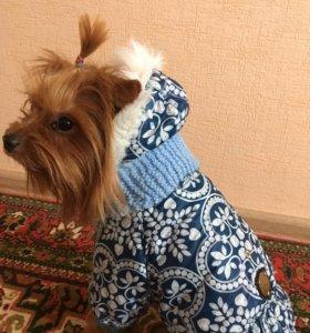 Одежда для собак (осень/зима)