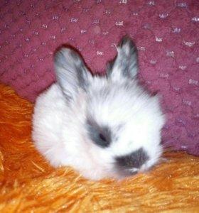 СРОЧНО!!!Кроличка-далматинец! 🐰