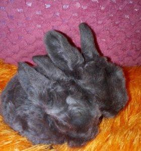 СРОЧНО!!!Темно-серые кролички!🐰Плюшевые!