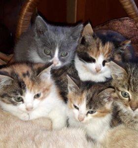 Срочно отдам котят в добрые руки !!!