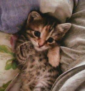 Красивые котята .бесплатно