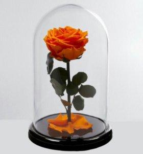 Роза в колбе оптом