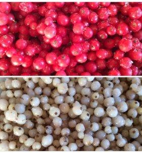 Красная и белая смородина замороженная
