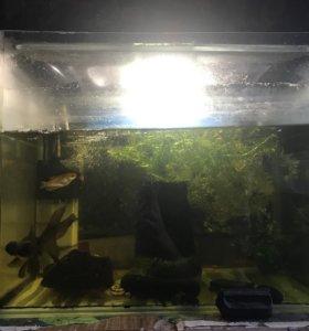 Аквариум на 75 л, компрессор и две рыбки